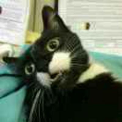 itcats profile image