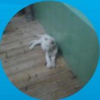 kaola profile image