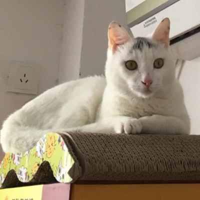 筱雅 profile image